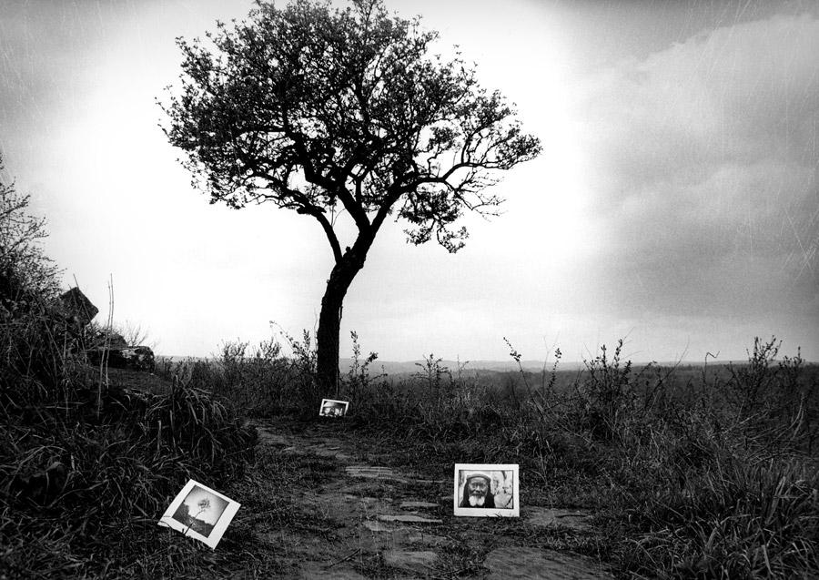 Reggae nature photo black & white Donald Manning